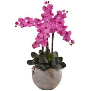 Phalaenopsis Orchid Arrangement with Sand Colored Bowl