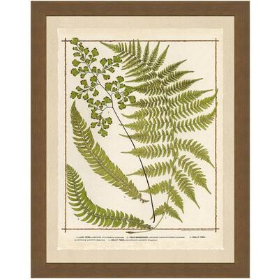 "20 in. x 24 in. ""Ferns I"" Full Size Framed Archival Paper Wall Art"