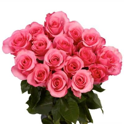 Fresh 100 Hot Pink Color Roses