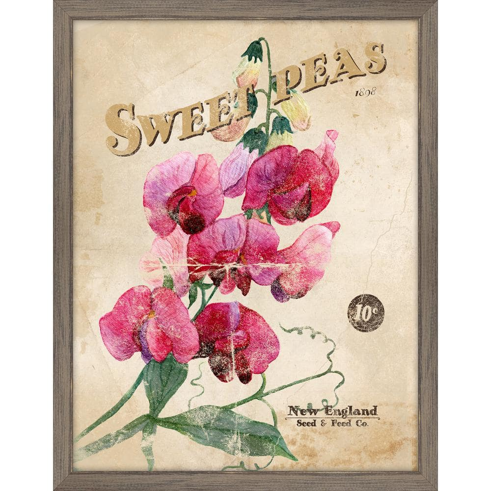 Melissa Van Hise Seed Packet Sweet Peas Framed Giclee Vintage Art Print 15 In X 19 In Ip11365 The Home Depot