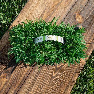 St Augustine Floratam Grass Plugs (32-Count) Natural, Affordable Lawn Improvement