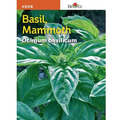 Herb Basil Mammoth Seed