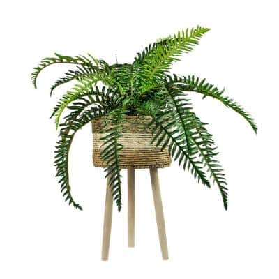 38 in. River Fern in Tri-Color Basket Stand
