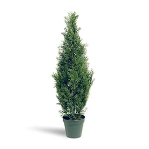 3 ft. Arborvitae Tree in Dark Green Round Growers Pot