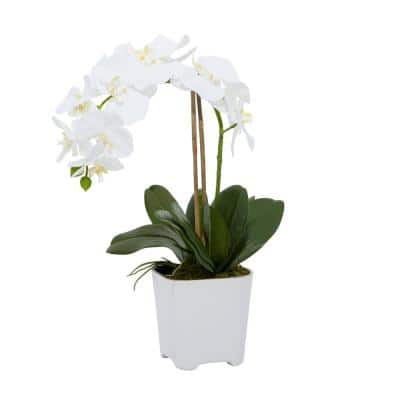 4 in. L x 18 in. H Elegant White Orchid with Bamboo in White Square Pot