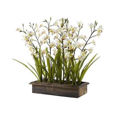 Indoor Cream Cymbidium Orchids in Rectangle Metal Planter