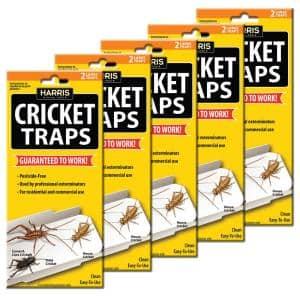 Cricket Trap Value Pack (10-Pack)