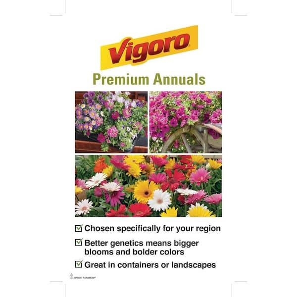 Vigoro 1 Qt Nanny Asiatic Lily Plant 1 0qlilnavg The Home Depot