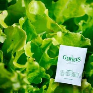 Lettuce Leaf Salad Bowl (1,000 Seed Packet)