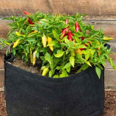 15 Gal. Capacity Expandable Patio Grow Tub