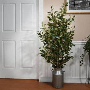 5 ft. Potted Ficus Tree in Pot