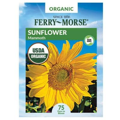 Sunflower Mammoth Organic Flower Seed