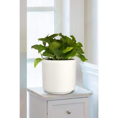 13 in. Matte White Cylinder Ceramic Planter