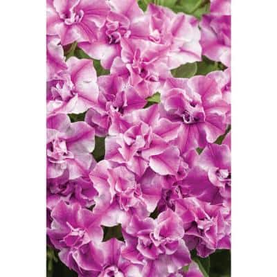 4.25 in. Grande Supertunia Pink Double Flowers Sharon (Petunia) Live Plant (4-Pack)