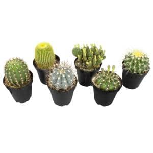 9 cm Assorted Cactus Plant Collection (6-Pack)