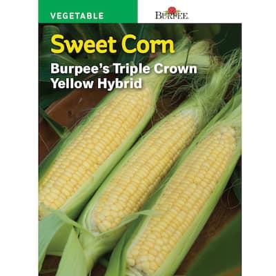 Corn Yellow XP Yellow Hybrid Seed
