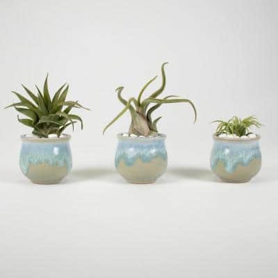 Air Plant Trio (Tillandsias) - Live Plants in 2.3 in. Blue, Gray Color Ceramic Pot Set w/ White Stone (3-Pack)