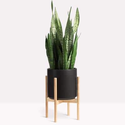 10 in. Black Ceramic Planter with Natural Wood Stand (10 in., 12 in. or 15 in.)