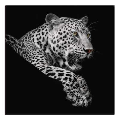 """Oppidan Home """"Leopard in Black and White"""" Acrylic Wall Art (40""""H X 40""""W)"""