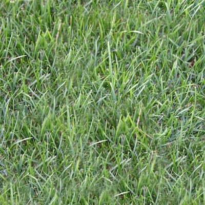 500 sq. ft. Perennial Ryegrass Sod (1-Pallet)