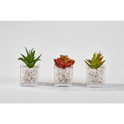 2.25 in. Succulent in Square Glass Container (Set of 3)