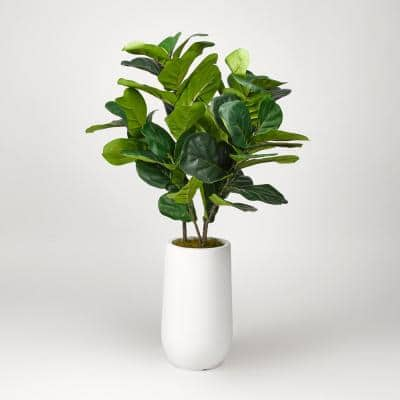 Fiddle Leaf Fig Plant in Round White Planter