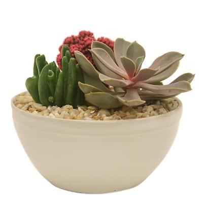 Pink Desert Gems Garden in 6 in. Gloss Ceramic Bowl