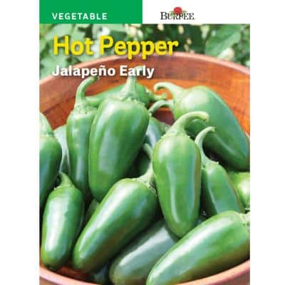 Pepper Hot Jalapeno Early Seed