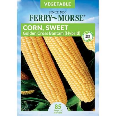 Sweet Corn Golden Cross Bantam Hybrid Seed