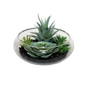 7 in. Dish Garden of Succulents on Black Stones in Glass Container