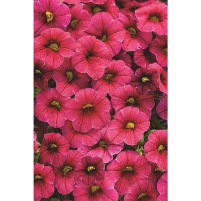 4.25 in. Superbells Cherry Red (Calibrachoa) Live Plant, Pink-Red Flowers Grande (4-Pack)
