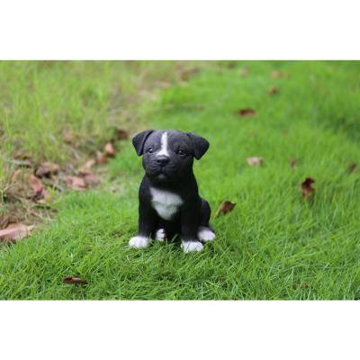 Staffordshire Pitbull Puppy
