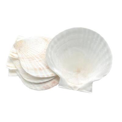 Natural Baking Shells, Set of 4