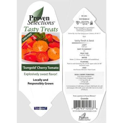 4.25 in. Grande Proven Selections Sungold (Cherry Tomato) Live Vegetable Plant, 4-Pack