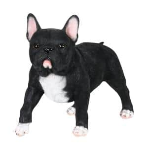 12 in. Hand Painted Black French Bulldog Garden Statue