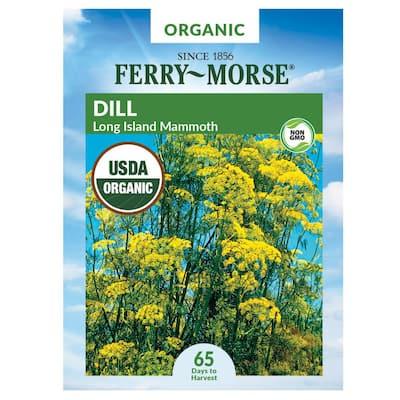 Dill Long Island Mammoth Organic Seed