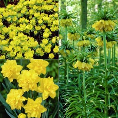 Yellow Deer, Rodent and Squirrel Resistant Garden Bulbs (25-Pack)