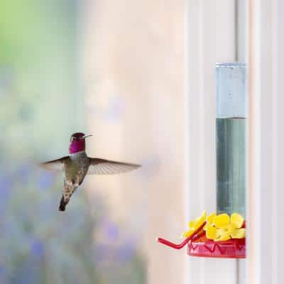 Window Mount Plastic Hummingbird Feeder - 8 oz. Capacity