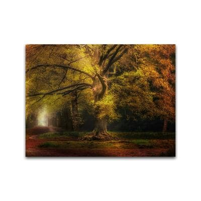 The Old One by Colossal Images Unframed Canvas Print Nature Photography Wall Art 18 in. x 24 in.