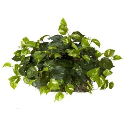Indoor 15in. H Green Pothos Ledge Plant (Set on Foam) Silk Plant