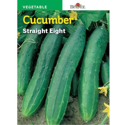 HL Cucumber Straight 8-Seed