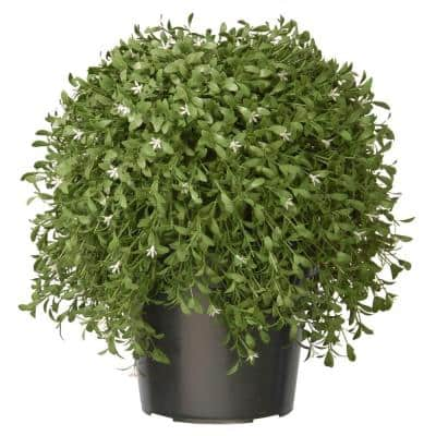18 in. Argentina Plant with Green Pot