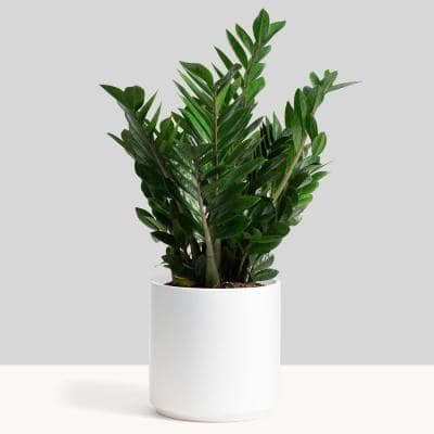 10 in. White Ceramic Indoor Planter (7 in. to 12 in.)