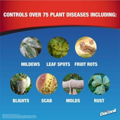 16 oz. Concentrate Fungicide