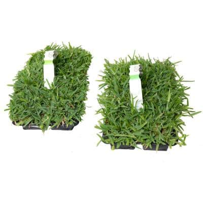 SodPods St Augustine Sun/Shade Grass Plugs (16-Count) Natural, Affordable Lawn Improvement