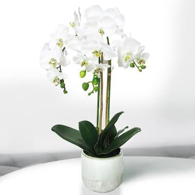 24 in. 2-Stem Artificial Phalaenopsis Orchid Flower Arrangement in Half Glazed Ceramic Pot