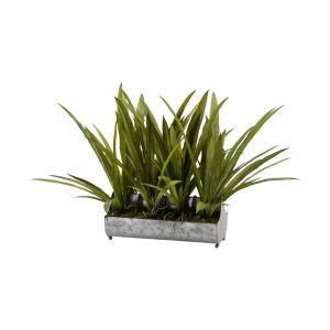 Indoor Orchid Foliage in Rectangle Metal Planter