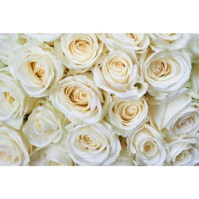 Photographic White Roses Farm and Country Wall Mural