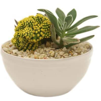 Yellow Desert Gems Garden in 6 in. Gloss Ceramic Bowl