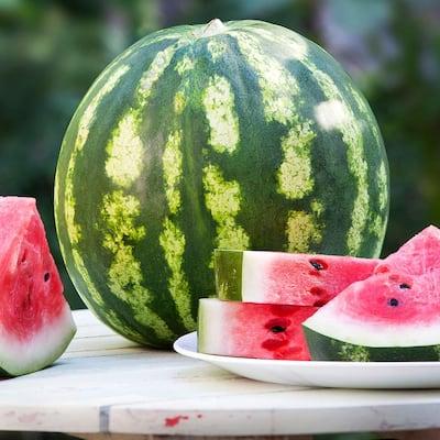 19.3 oz. Crimson Sweet Watermelon Plant